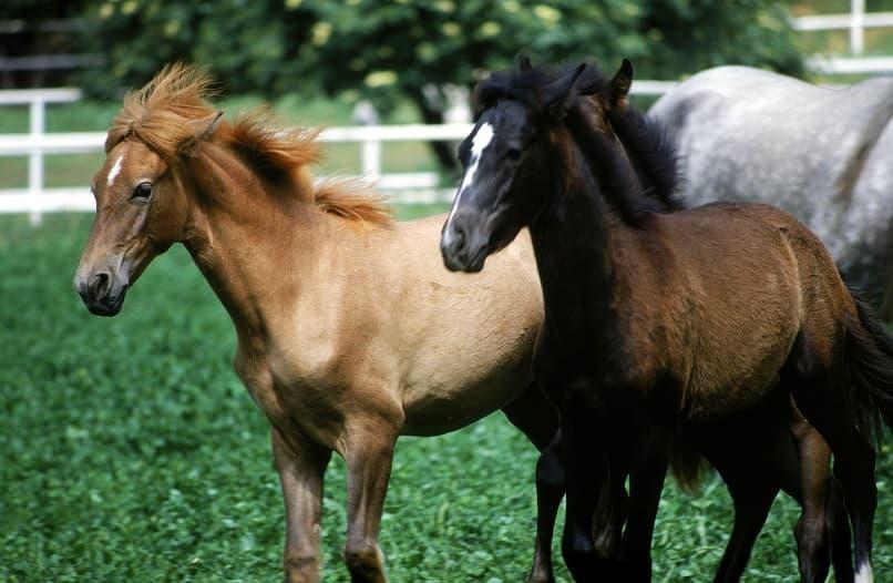 اسب های زیبا در زمین سوارکاری