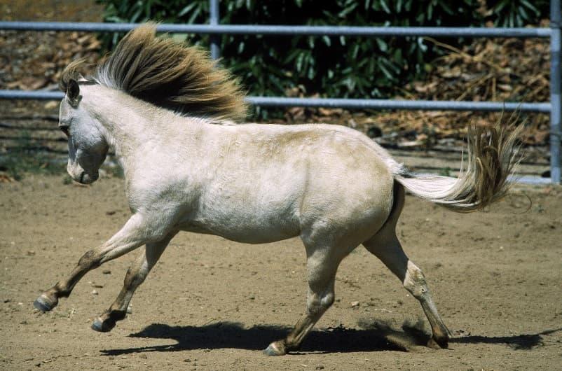 اسب دونده در زمین تمرین