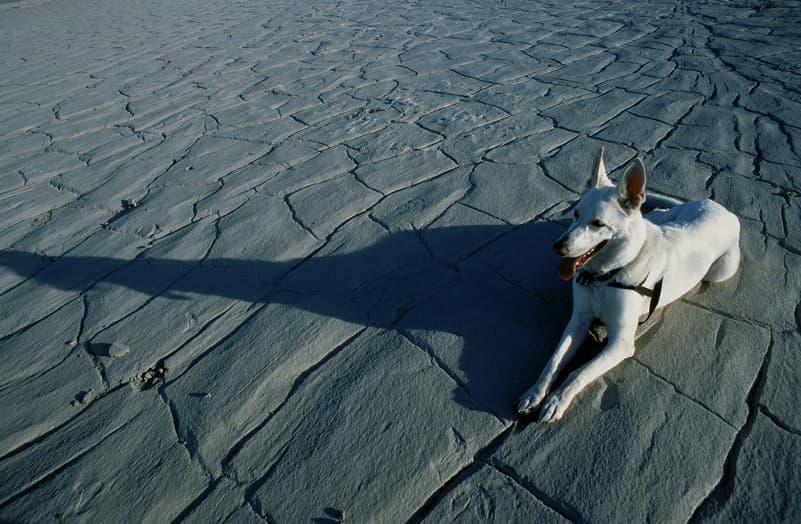 سگ سفید زیبا روی سنگ فرش