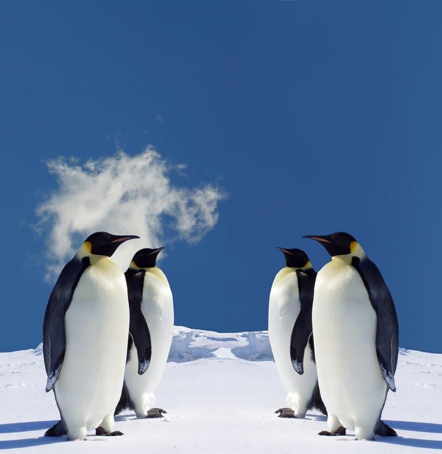 تصویر پنگوئن ها در یخبندان
